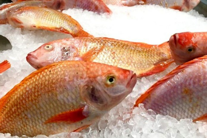 Can You Freeze Fish Whole Without Cleaning Them