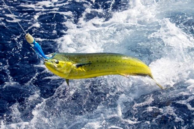what bait to use for sea fishing