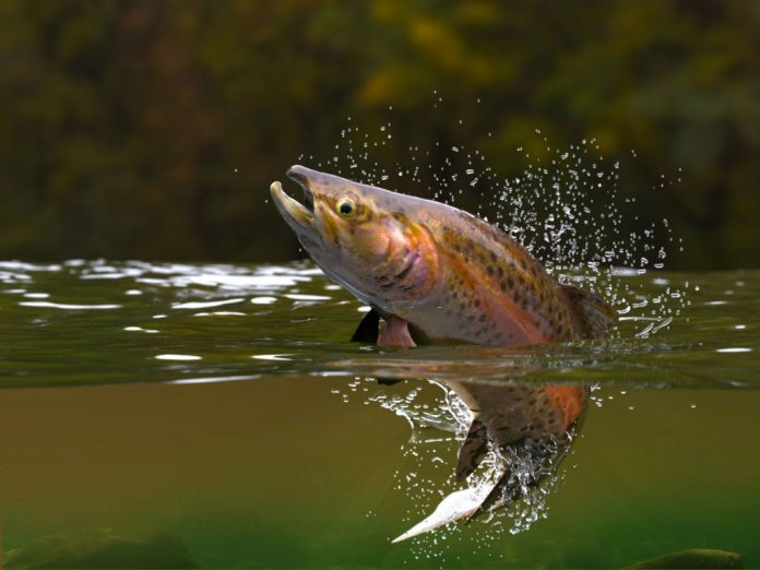 best time of year for trout fishing california