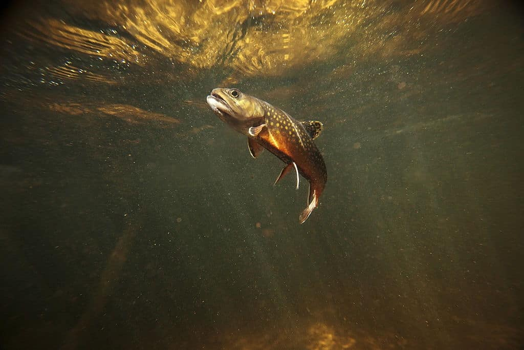 the best time of year for trout fishing california