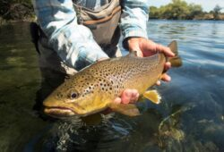 When is the Best Time to Trout Fish In Colorado?