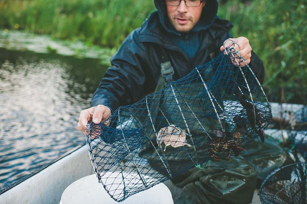 catch crawfish