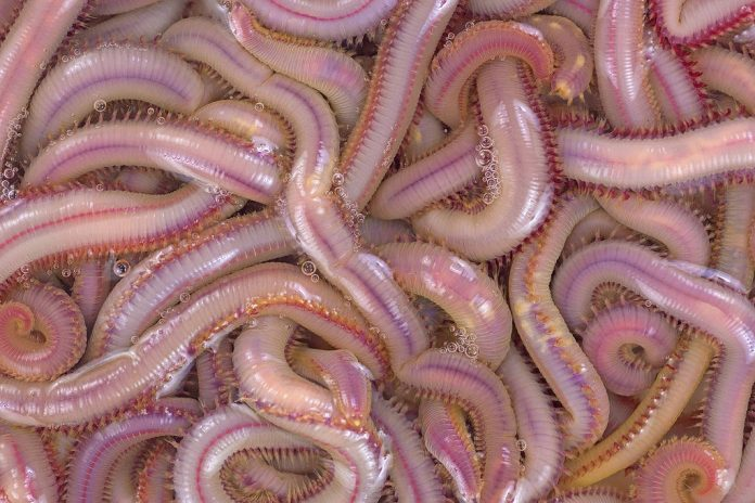 how to keep bloodworms alive