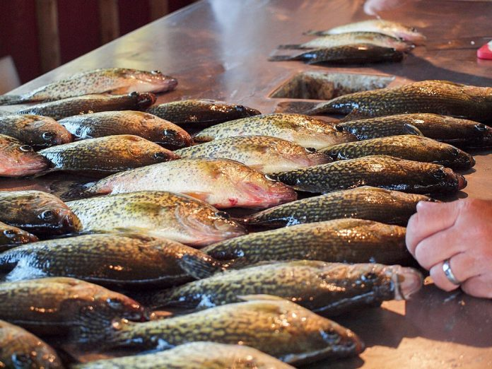 what does crappie taste like