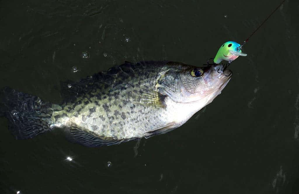 what size hook to use for crappie
