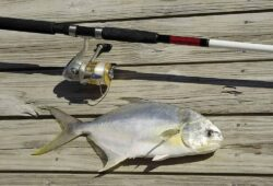 How to Catch Pompano In Florida: The Ultimate Guide!