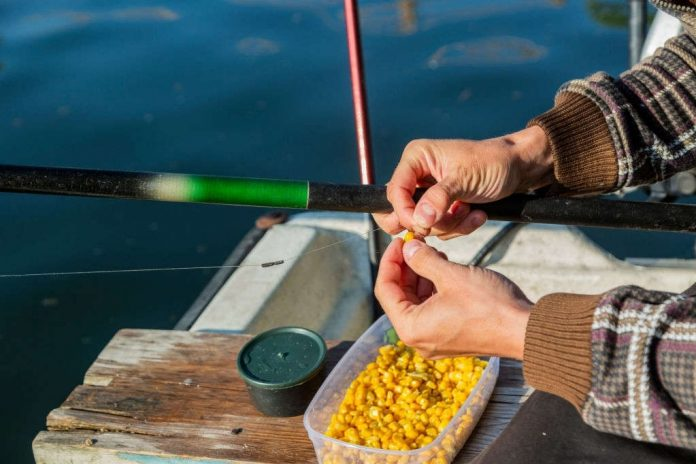 is fishing with corn illegal in texas