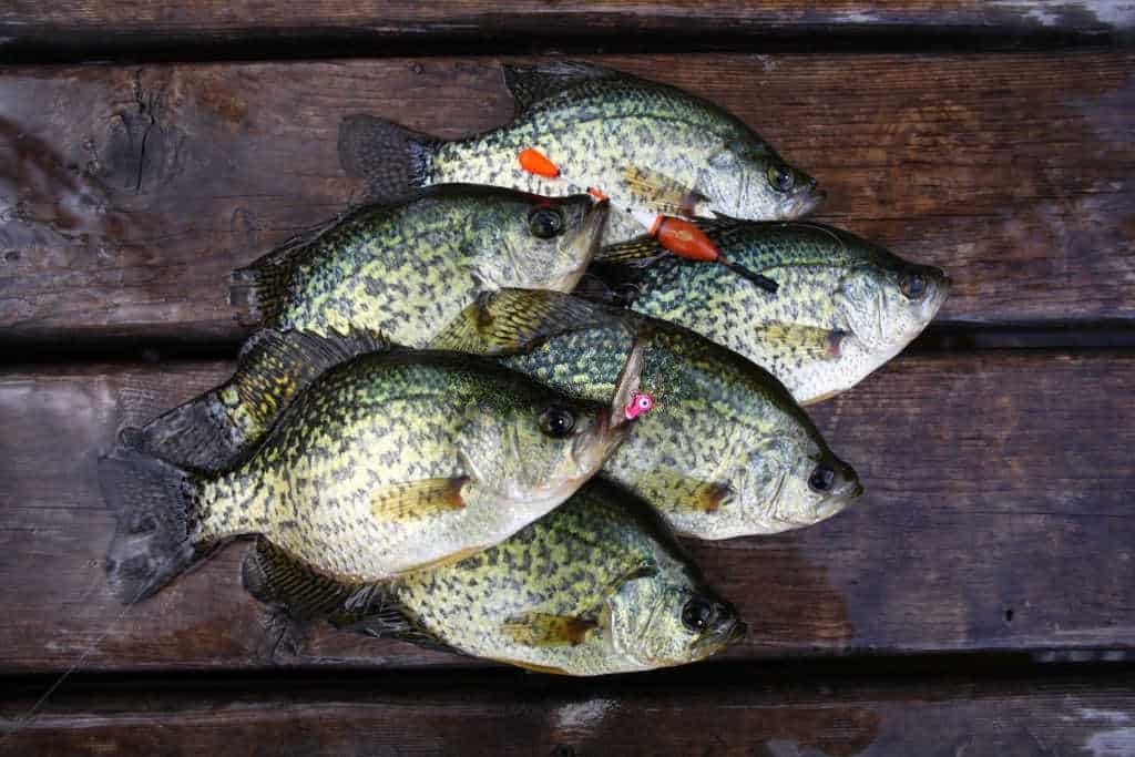 why is it illegal to sell crappie