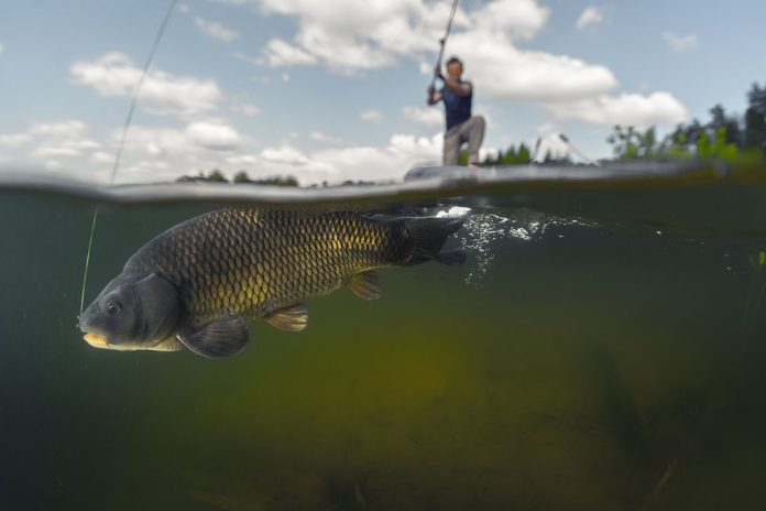 how to catch carp in florida