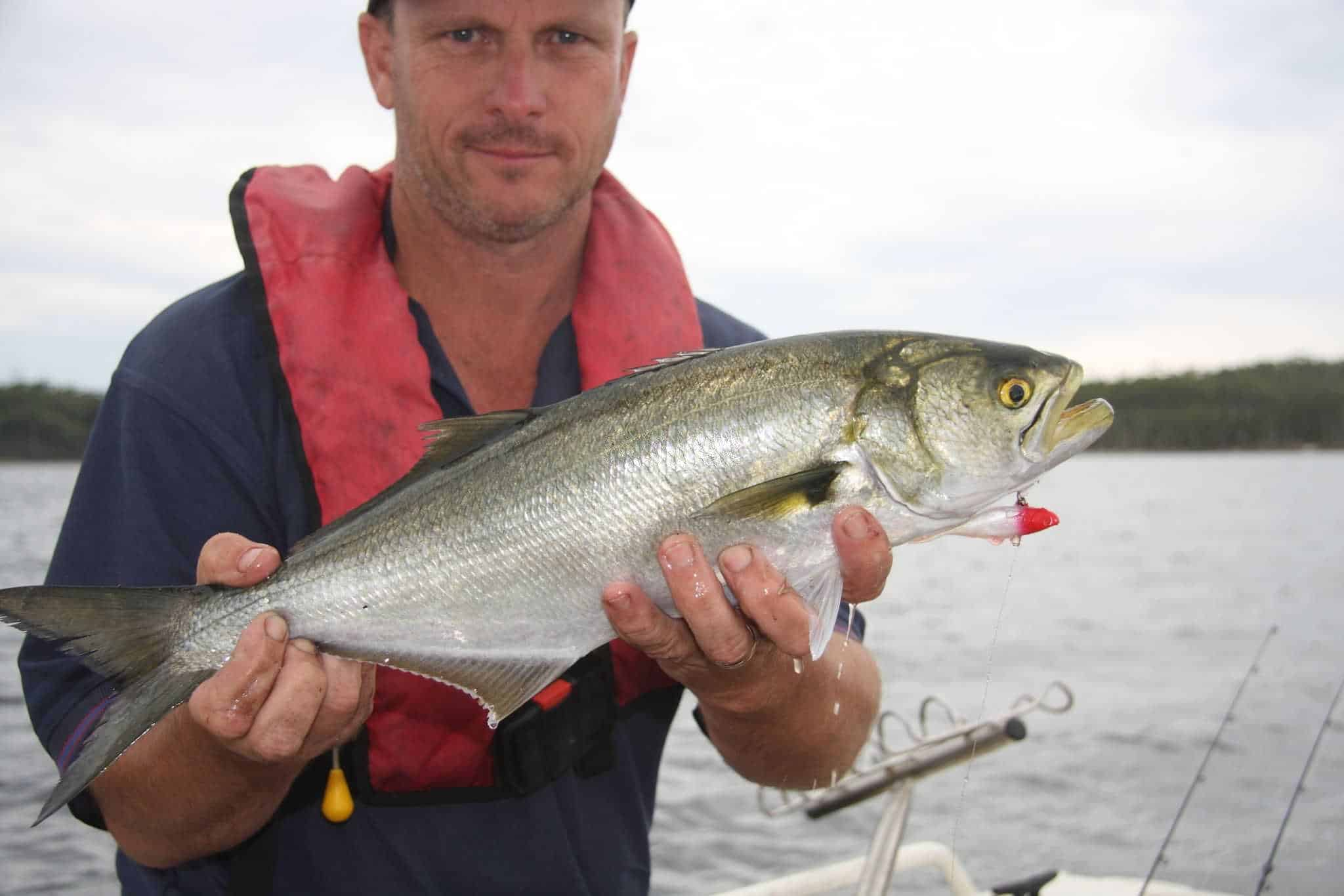 additional tips on surf fishing for bluefish