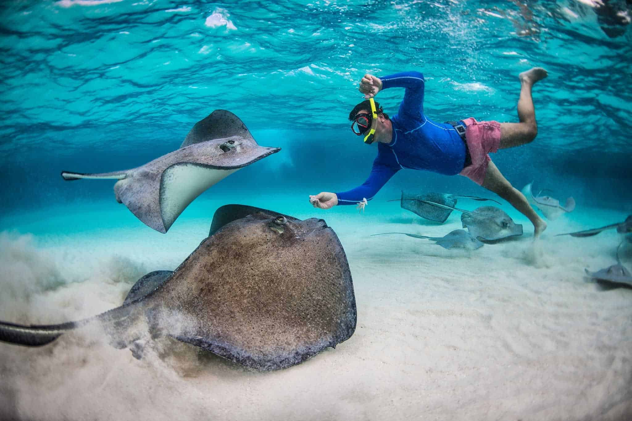 what to do when stung by a stingray