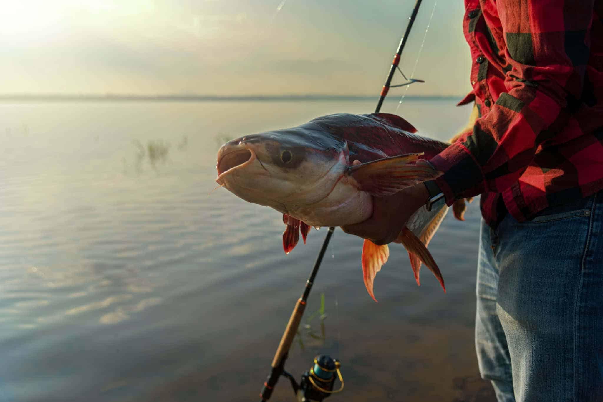 how to bait a catfish hole