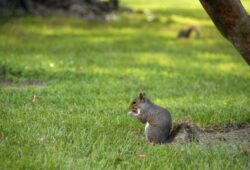 Can I Shoot Squirrels In My Yard in Texas? Know Before You Aim!