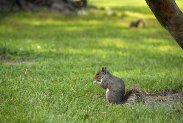 can i shoot squirrels in my yard texas