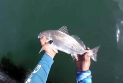 When Do Croaker Start Biting In Virginia – Planning For A Successful Angling Trip