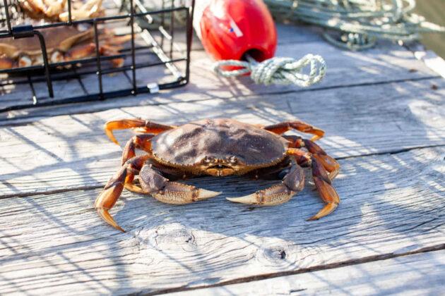 crabbing in southern california