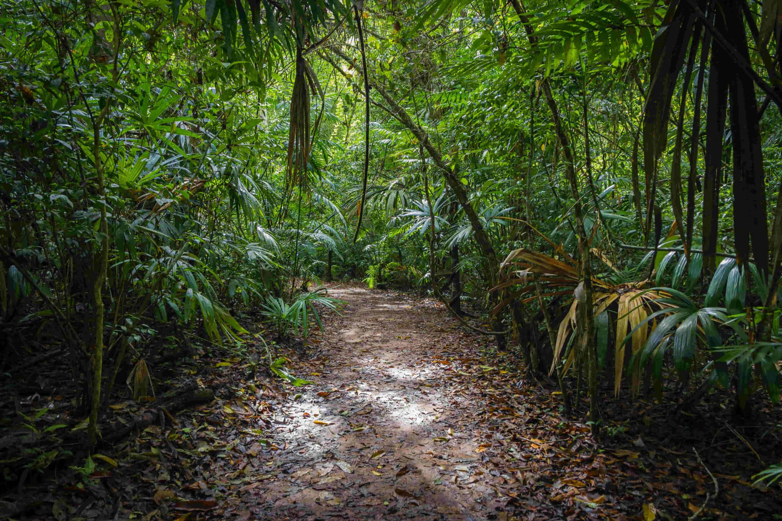 tips to prepare for a jungle trekking adventure