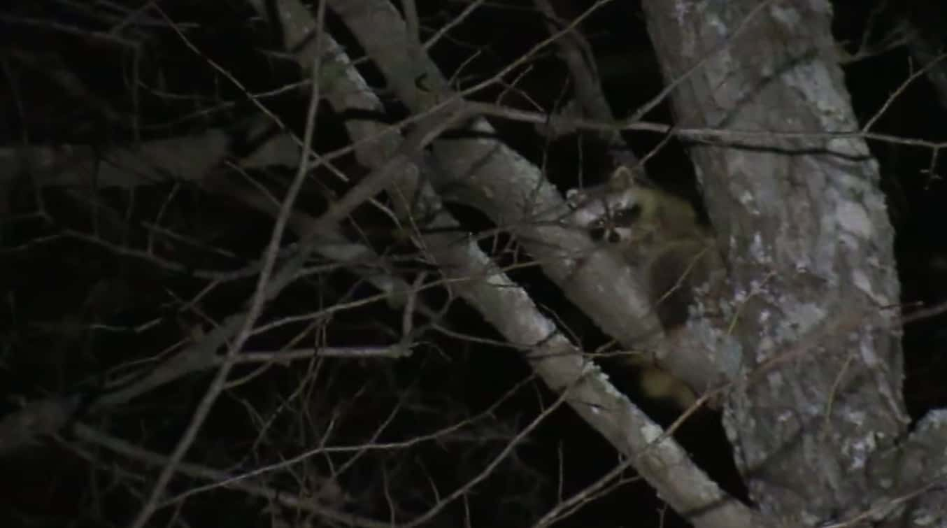 additional tips on how to build a coon hunting light